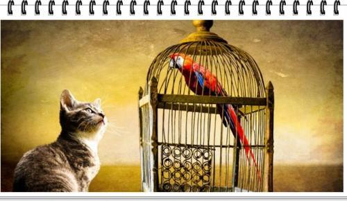 Karga ile Papağanın Hikayesi